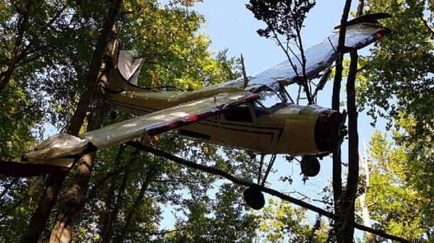 Безхозный легкомоторный самолет найден в кроне деревьев